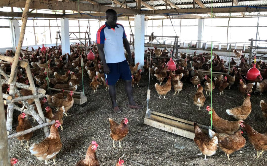 Supporting the poultry sector in Sierra Leone