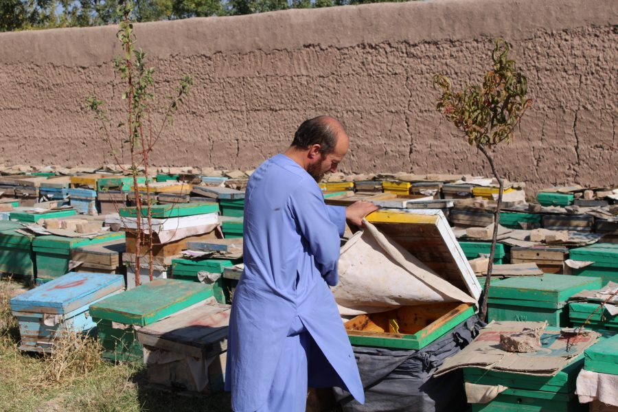Private sector development Afghanistan